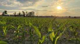 'Don't give up on the stand': Agronomist shares update