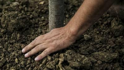 Calendar: Fall tree planting program
