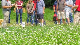 Cover crop trials offer insights
