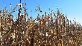 Leading corn and soybean seed performers excel despite demanding 2020 season
