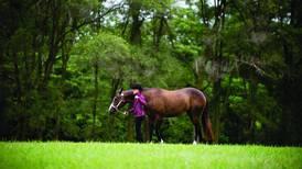 Kline: The American Horse Council announces plans for the next Horse Industry Economic Impact Study