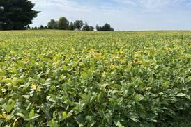 Tackling tar spot: 2021 harvest pushes forward
