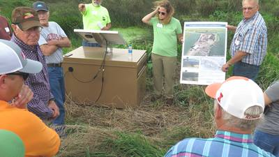 Constructed wetland doing its job