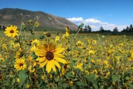 Rainy season unleashes with fury, beauty in U.S. Southwest