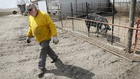 Analysts look at hog market woes — and tools to help