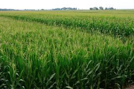 Bayer wants to make short corn 'PAY'