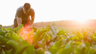 Barbic: Sustainability grows on the American farm