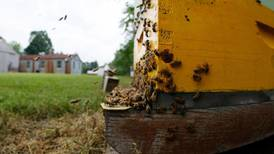 Program allows bee owners to register hives throughout the state